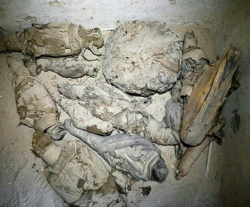 Mumie myszy, kotów i ptaków. Fascynujące znalezisko w Egipcie
