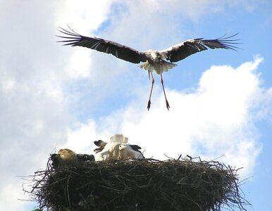 """""""Nasi wychowankowie nauczyli się latać"""""""