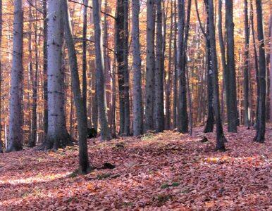 Będzie referendum w sprawie Lasów Państwowych?