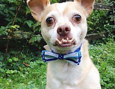 """Pies wygląda jakby miał wściekliznę!  """"Zobaczyłam ten uroczy zgryz"""""""