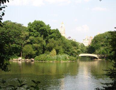 Miliarder przekazuje 100 milionów dolarów na utrzymanie Central Parku