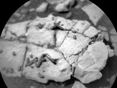 Znaleziono życie na Marsie? Czym są tajemnicze skały z Czerwonej Planety?