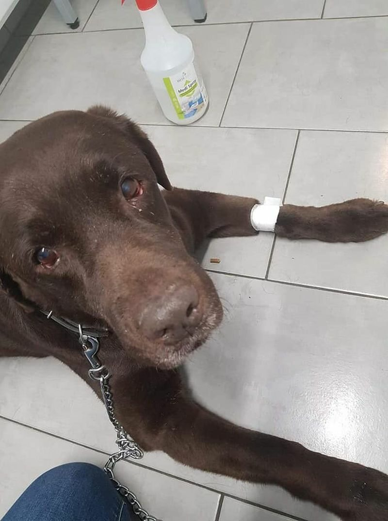 Labradory zostały odebrane właścicielom
