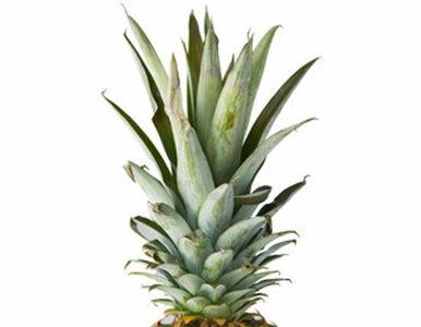 MAKRO poszerza ofertę BIO warzyw i owoców