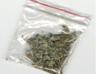 Pół kg marihuany i krzaki konopii w mieszkaniu 17-latka