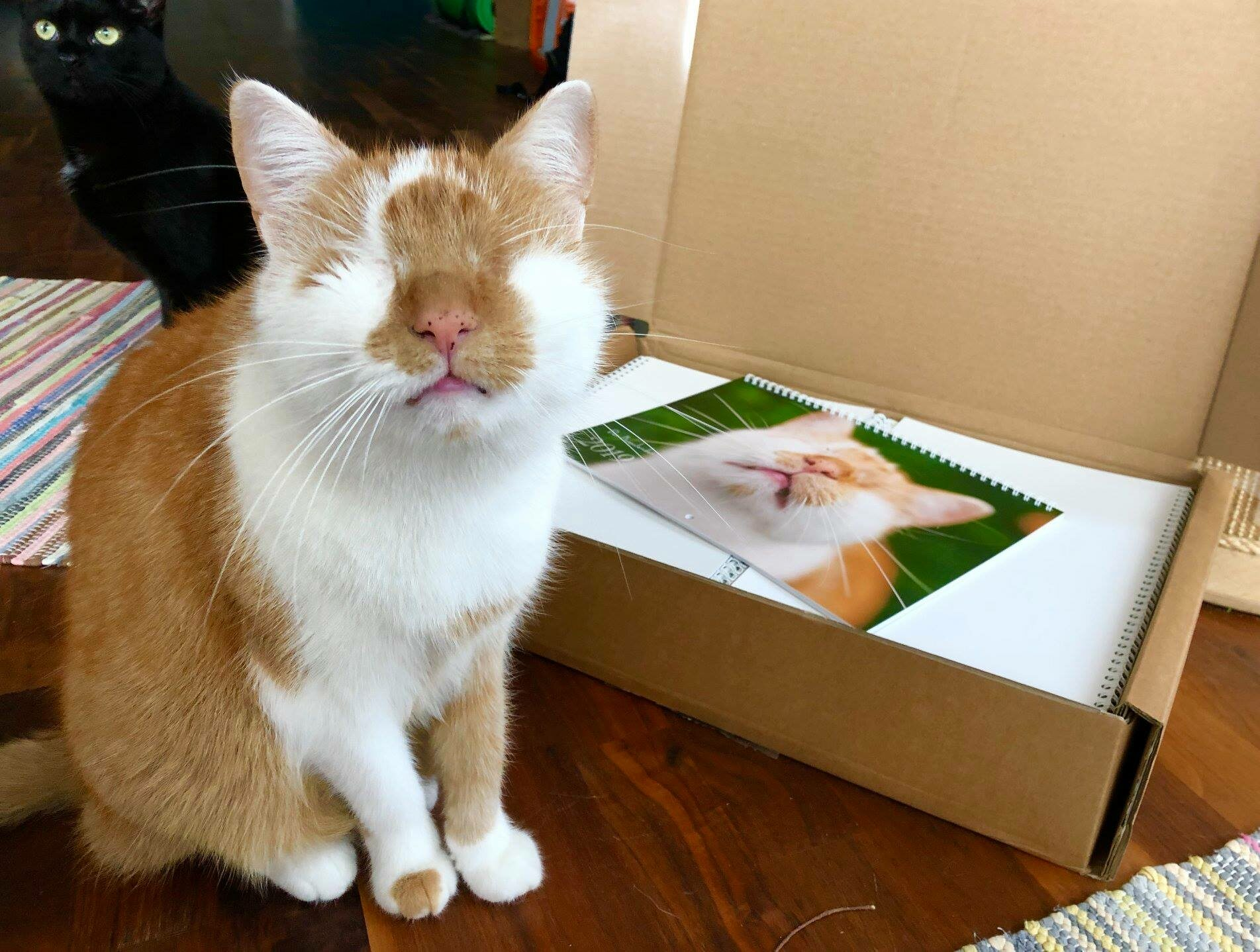 Kazou, kot bez oczu