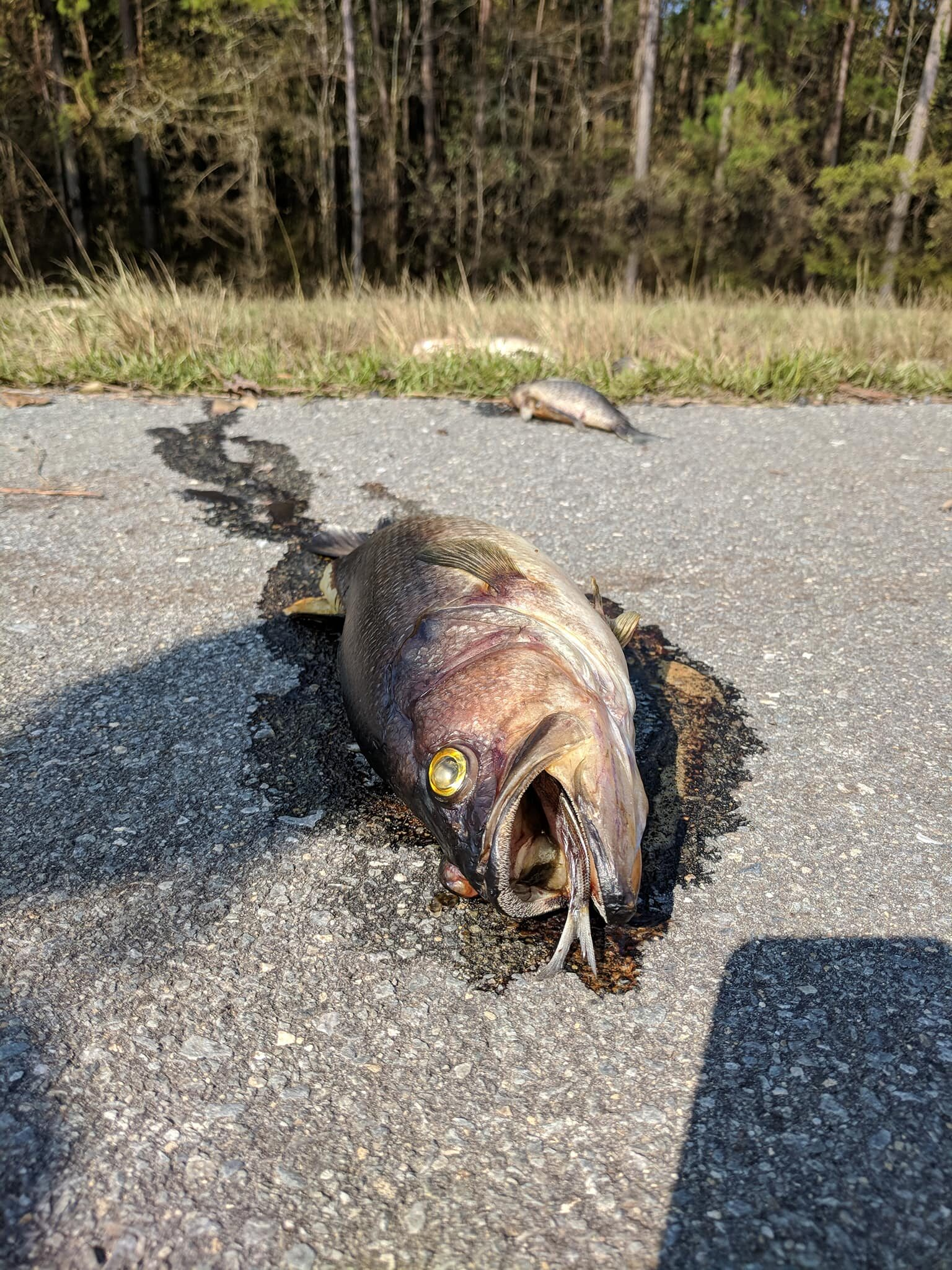 Usuwanie ryb z autostrady