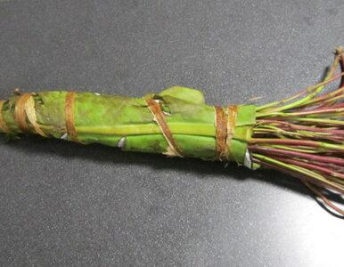 Na lotnisku znaleziono 60 kg... liści narkotycznej rośliny