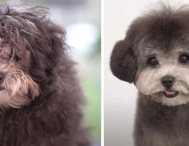 Wizyta u fryzjera całkowicie przemieniła te psy. Efekt? Oceńcie sami