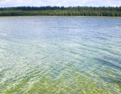 Na dnie jeziora odnaleziono średniowieczne zabytki