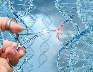 Rewolucyjne wyniki badań. Naukowcom dało się usunąć mutację genetyczną z...