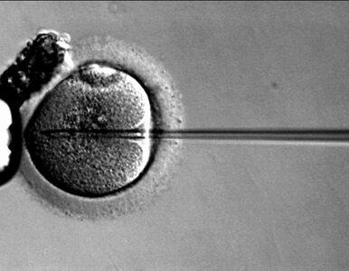 W szczecińskiej klinice in vitro doszło do drugiej pomyłki?