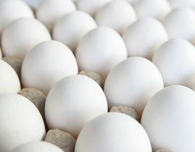 Niemcy jedli skażone jaja?