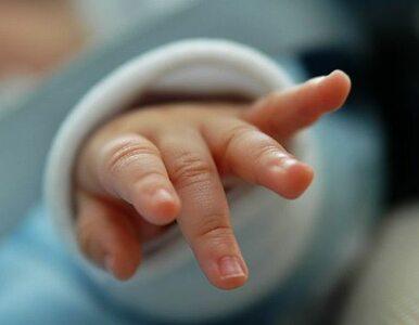 Martwy noworodek we wrocławskim oknie życia