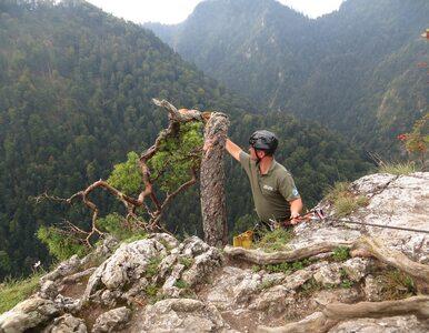 Obcięli gałąź legendarnej 500-letniej sosny w Pieninach. Powód?