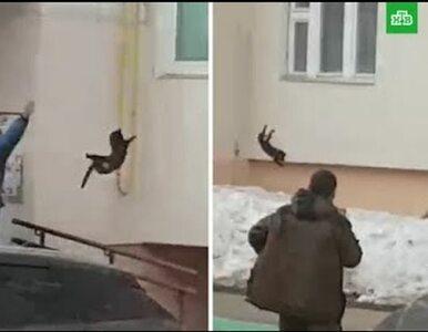 Rzuciła kotem, żeby... przestraszyć łosia. Efekt? Możecie być zaskoczeni