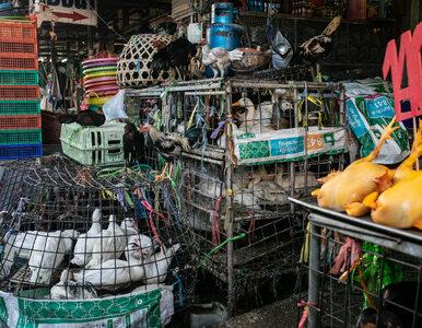 Chiny. Wuhan formalnie ogłosiło zakaz jedzenia dzikich zwierząt