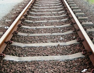 Bobry spowodowały wypadek kolejowy