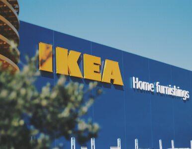 IKEA zwolniła pracownika krytykującego LGBT. Tomasz K. wydał oświadczenie
