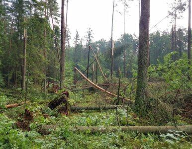 Zniszczenia po trąbie powietrznej na Mazurach