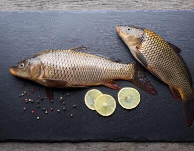 Zaskakujące badania naukowców. Dzieci jedzące ryby lepiej śpią i są...