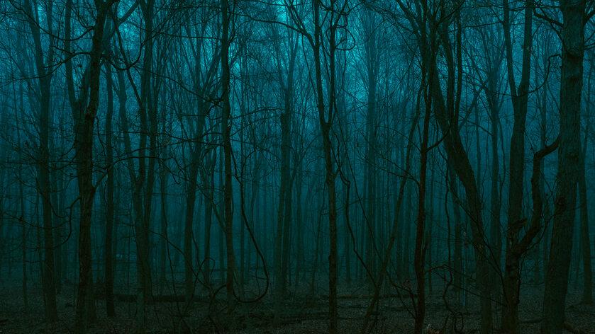 Las nocą, zdjęcie ilustracyjne