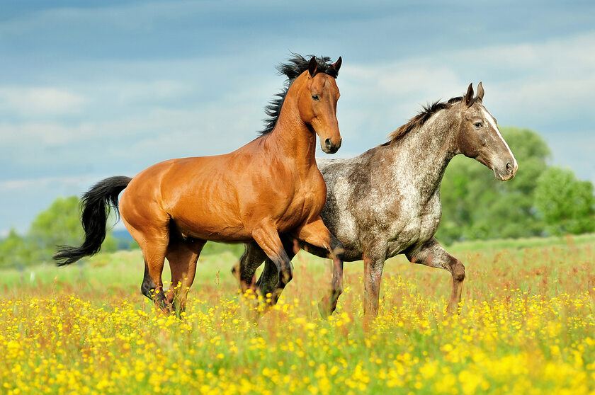 Konie, zdjęcie ilustracyjne