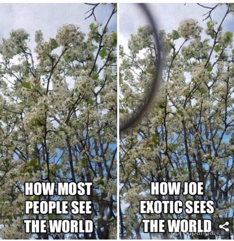 Jak większość ludzi widzi świat/Jak Joe Exotic widzi świat