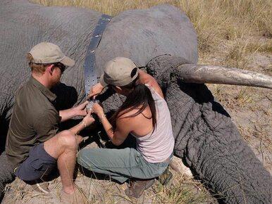 Zaskakujące doniesienia z pałacu. Harry i Meghan przeniosą się do Afryki?