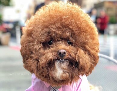 Współpracował z Google i ma tysiące fanów. Zdjęcia tego psa są dosyć...