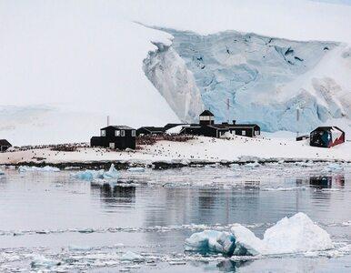 Rekordowe zainteresowanie pracą na Antarktydzie. Zgłosiło się 1,5 tys....