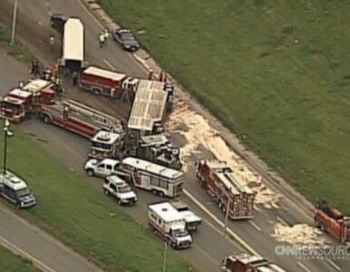 Wypadek ciężarówki wiozącej krowy. Wiele zwierząt zginęło