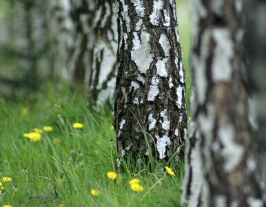 Podkarpacie: posadzą 18,5 mln drzew, chociaż nie mają gdzie