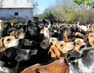 Jeden mężczyzna i 750 psów. Ta historia chwyta za serce