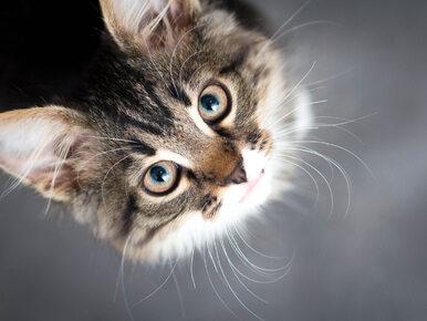 Lubisz oglądać zabawne filmiki z kotami? Sprawdź, co myślą o tym naukowcy